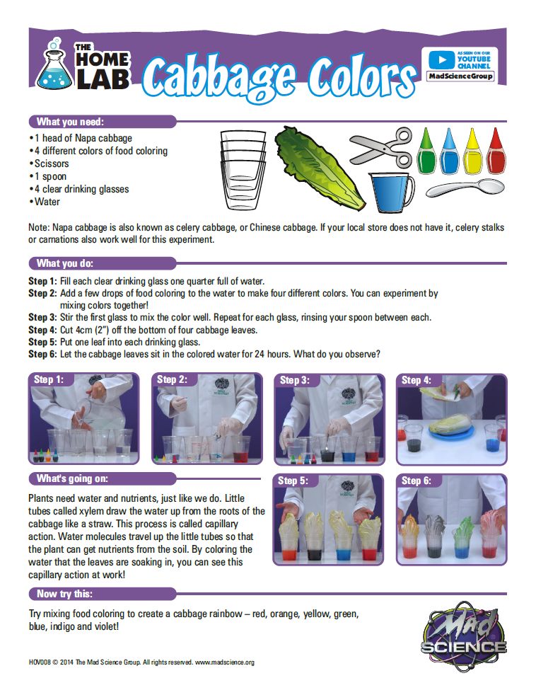 Cabbage Colors Home Lab